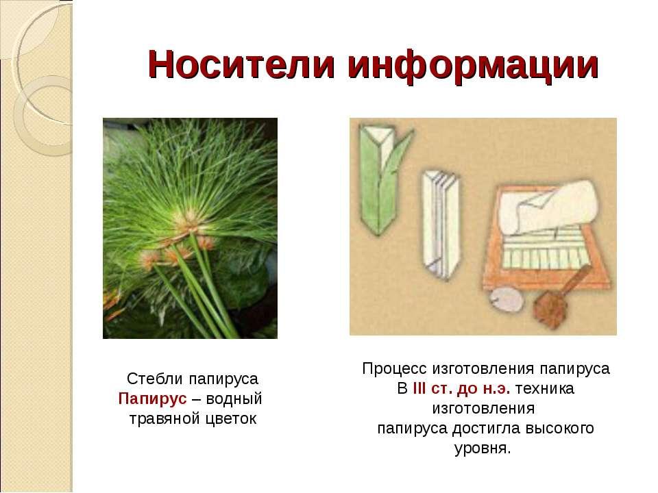 Носители информации Стебли папируса Папирус – водный травяной цветок Процесс ...