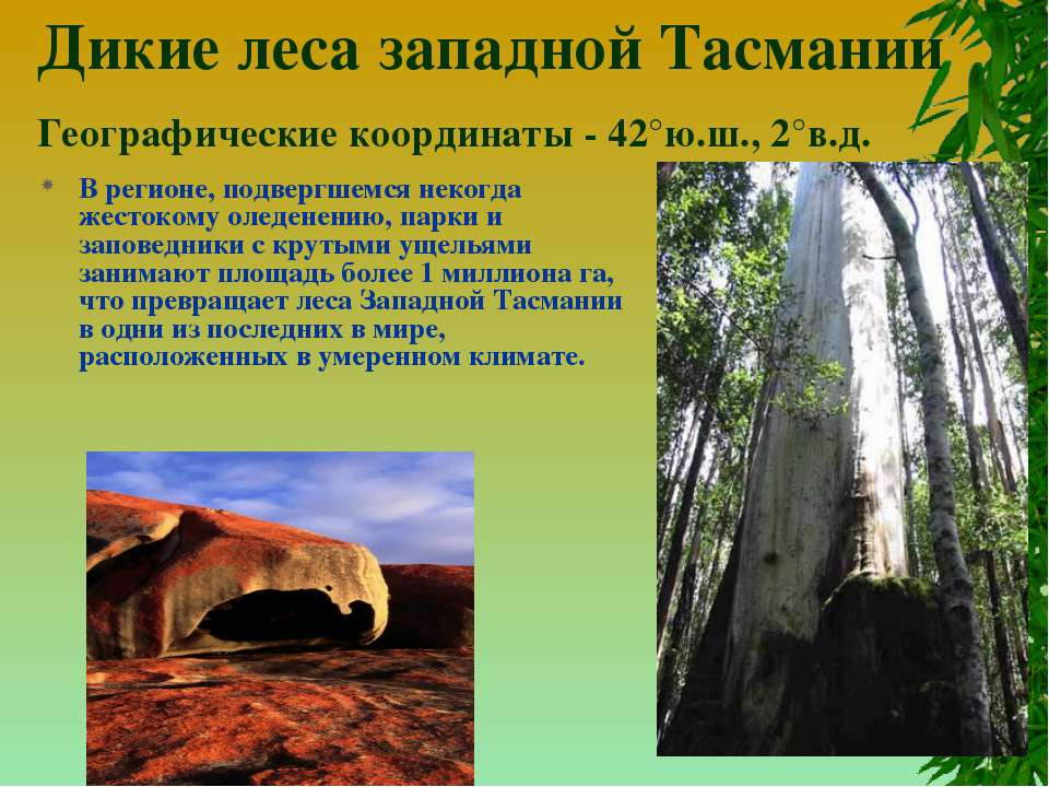 Дикие леса западной Тасмании Географические координаты - 42°ю.ш., 2°в.д. В ре...