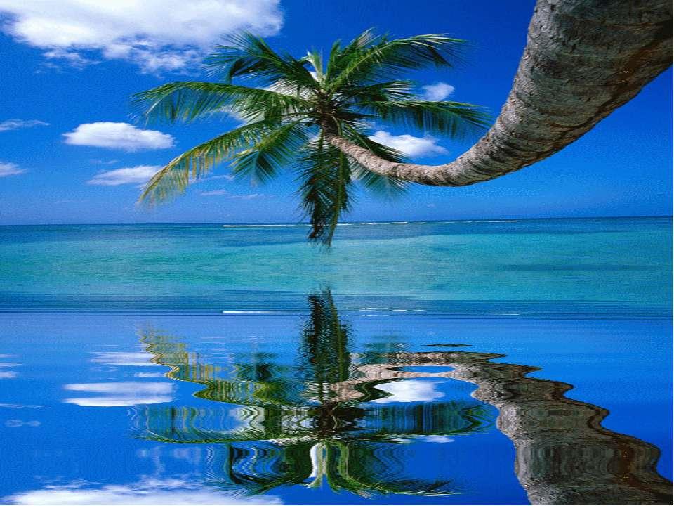 На песке растет густой тропический лес, а в центре острова находятся пресново...