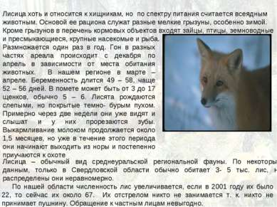 Лисица хоть и относится к хищникам, но по спектру питания считается всеядным ...