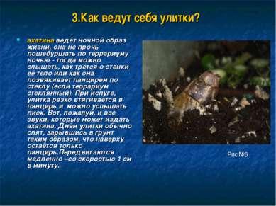 3.Как ведут себя улитки? ахатина ведёт ночной образ жизни, она не прочь пошеб...