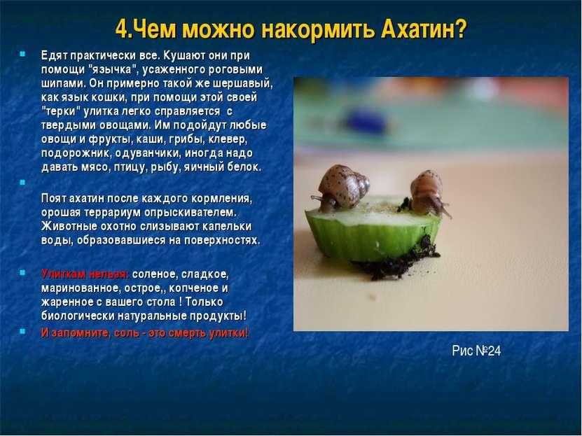 """4.Чем можно накормить Ахатин? Едят практически все. Кушают они при помощи """"яз..."""
