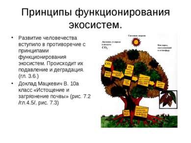 Принципы функционирования экосистем. Развитие человечества вступило в противо...