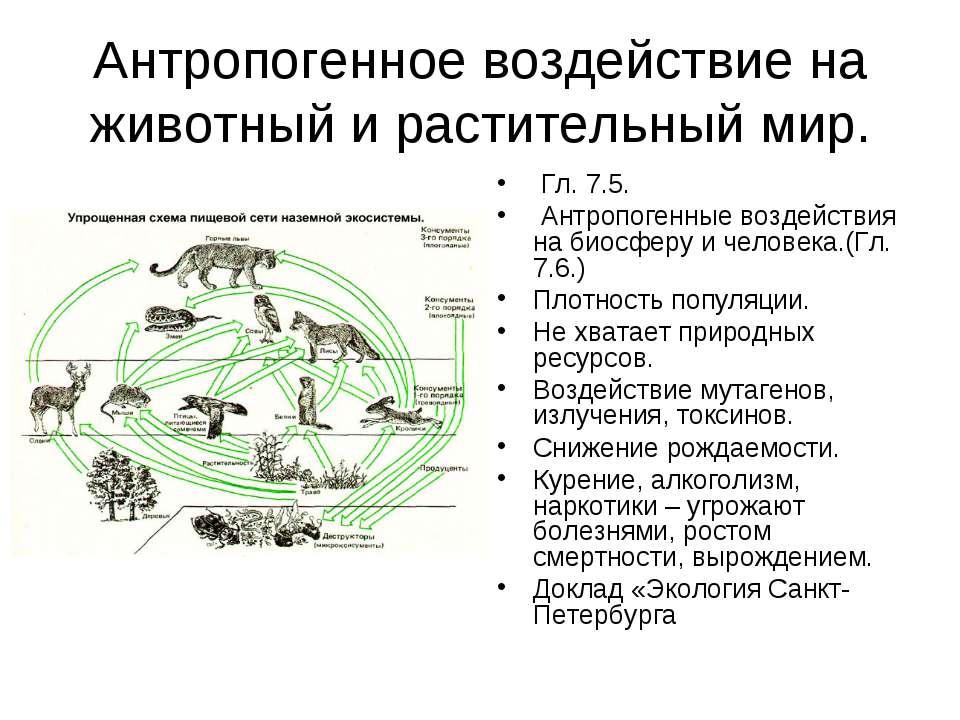 Антропогенное воздействие на животный и растительный мир. Гл. 7.5. Антропоген...