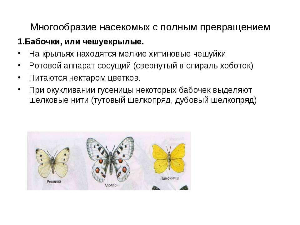 Многообразие насекомых с полным превращением 1.Бабочки, или чешуекрылые. На к...