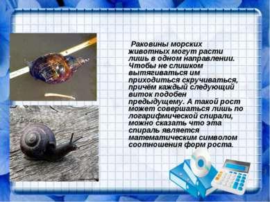 Раковины морских животных могут расти лишь в одном направлении. Чтобы не слиш...
