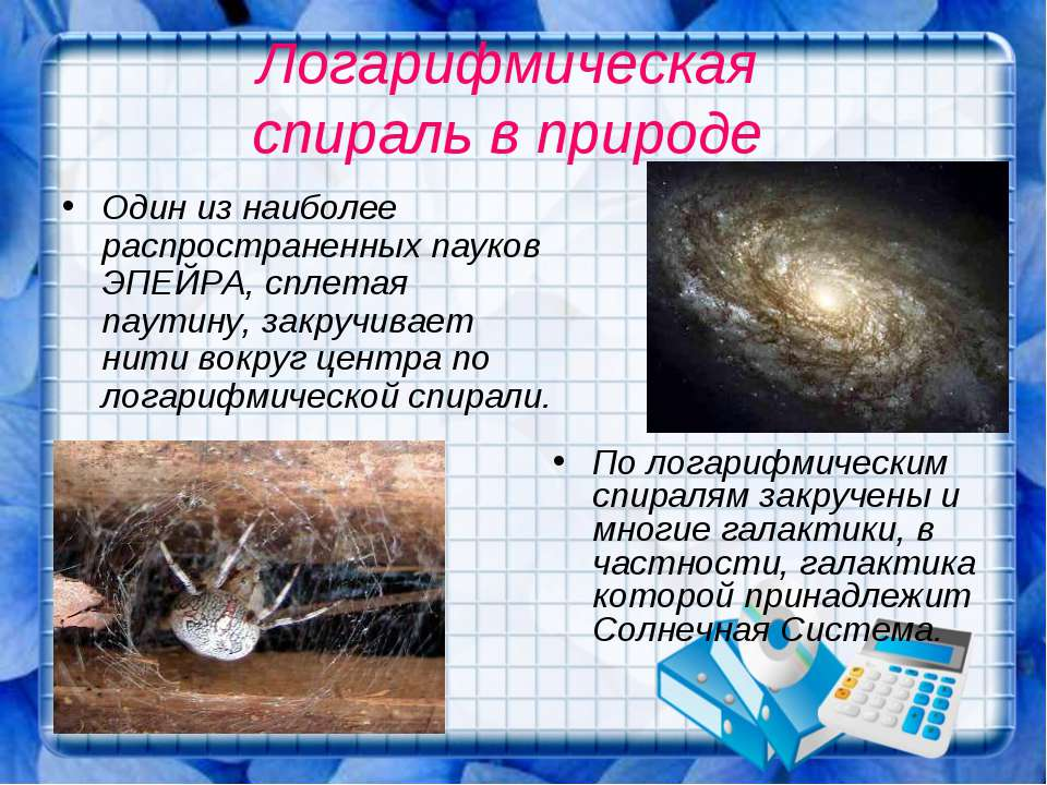 Логарифмическая спираль в природе Один из наиболее распространенных пауков ЭП...