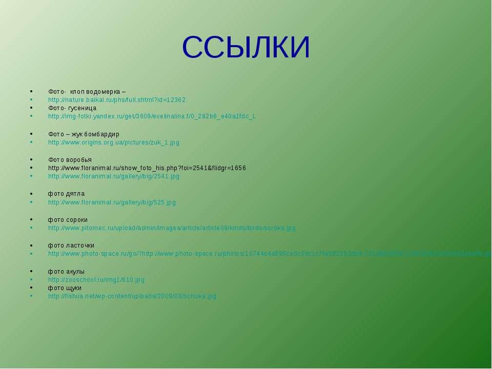 ССЫЛКИ Фото- клоп водомерка – http://nature.baikal.ru/phs/full.shtml?id=12362...