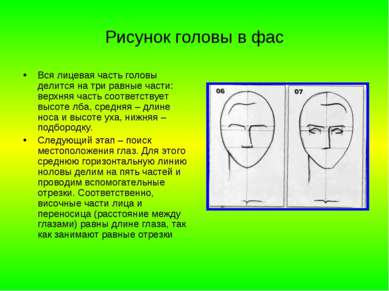 Рисунок головы в фас Вся лицевая часть головы делится на три равные части: ве...