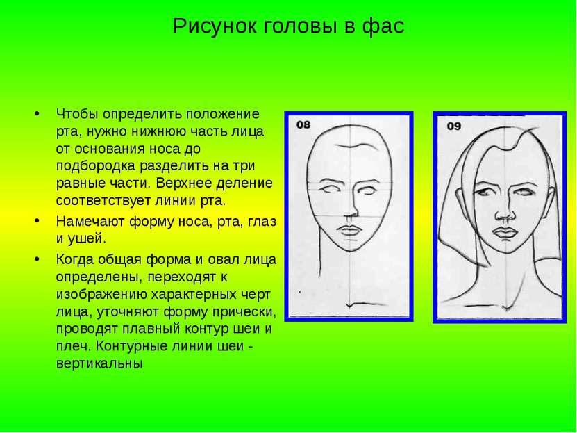 Рисунок головы в фас Чтобы определить положение рта, нужно нижнюю часть лица ...