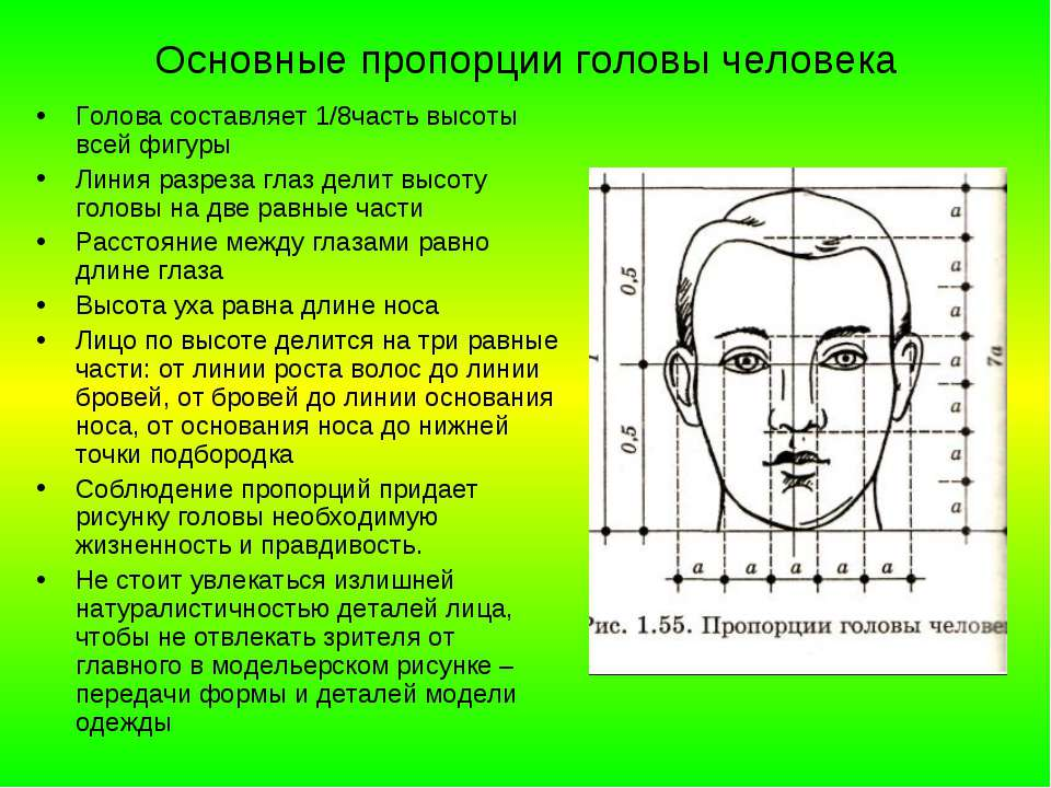 Основные пропорции головы человека Голова составляет 1/8часть высоты всей фиг...