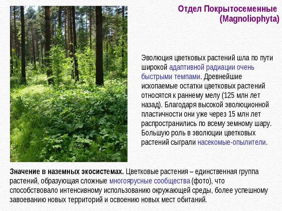 Отдел Покрытосеменные (Magnoliophyta) Значение в наземных экосистемах. Цветко...