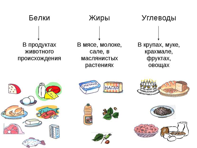 Белки Жиры Углеводы В продуктах животного происхождения В мясе, молоке, сале,...
