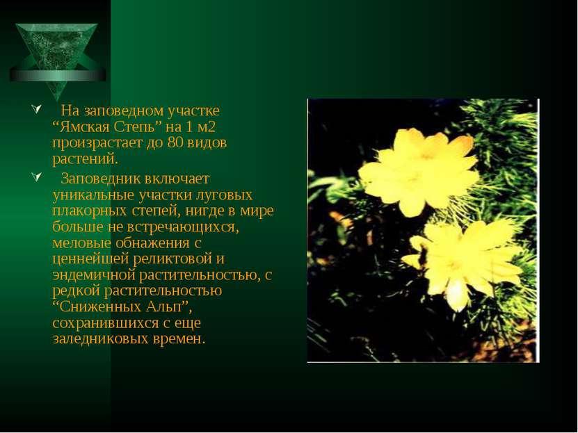 """На заповедном участке """"Ямская Степь"""" на 1 м2 произрастает до 80 видов растени..."""