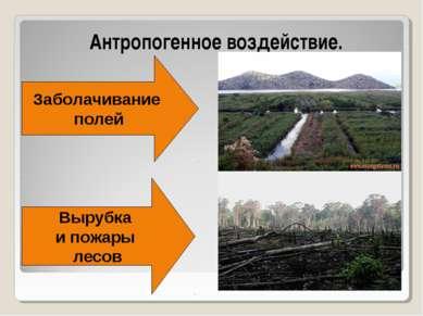 Антропогенное воздействие. Заболачивание полей Вырубка и пожары лесов