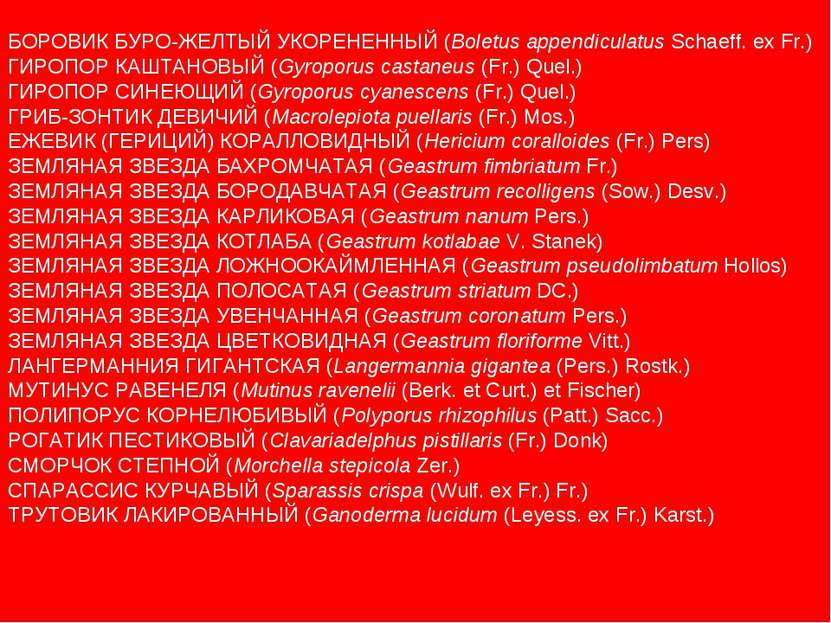 БОРОВИК БУРО-ЖЕЛТЫЙ УКОРЕНЕННЫЙ (Boletus appendiculatus Schaeff. ex Fr.) ГИРО...