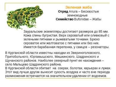 Зеленая жаба Отряд Anura – Бесхвостые земноводные Семейство Bufonidae – Жабы ...