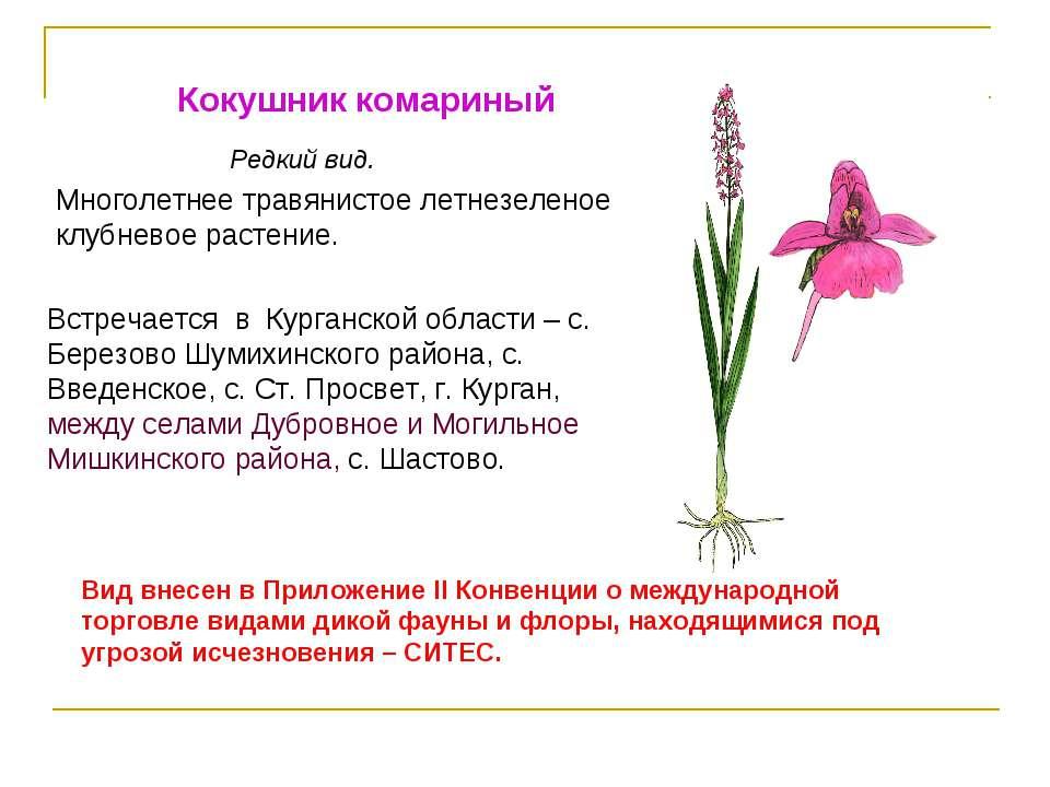 Кокушник комариный Редкий вид. Встречается в Курганской области – с. Березово...