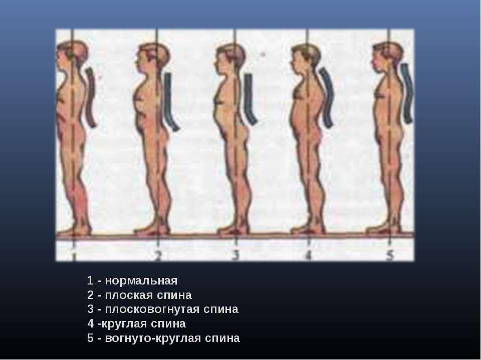 Обучение массажу при сколиозе