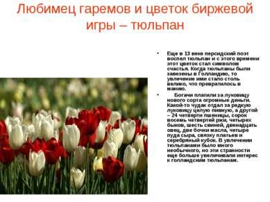 Любимец гаремов и цветок биржевой игры – тюльпан Еще в 13 веке персидский поэ...