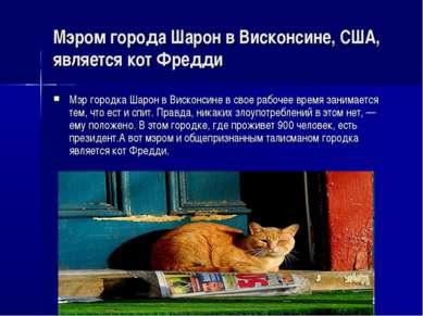 Мэром города Шарон в Висконсине, США, является кот Фредди Мэр городка Шарон в...
