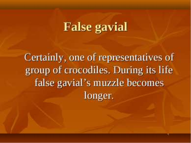 False gavial Certainly, one of representatives of group of crocodiles. During...