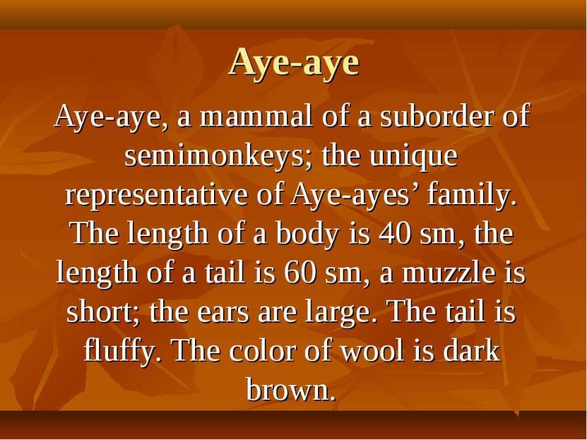 Aye-aye Aye-aye, a mammal of a suborder of semimonkeys; the unique representa...
