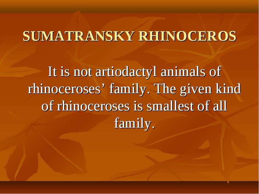 SUMATRANSKY RHINOCEROS It is not artiodactyl animals of rhinoceroses' family....