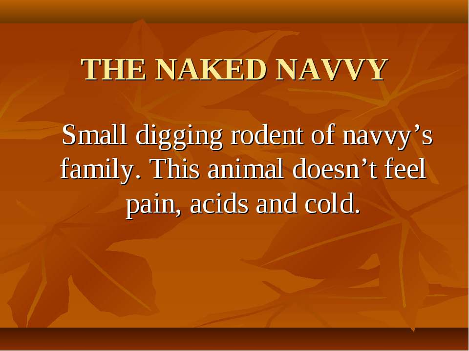 THE NAKED NAVVY Small digging rodent of navvy's family. This animal doesn't f...