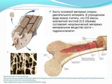 http://www.doctor78.ru/docimg/2.jpg http://waukesha.uwc.edu/lib/reserves/pdf/...