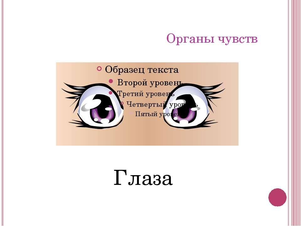Органы чувств Глаза