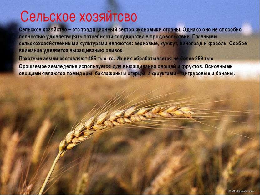 Сельское хозяйтсво Сельское хозяйство – это традиционный сектор экономики стр...