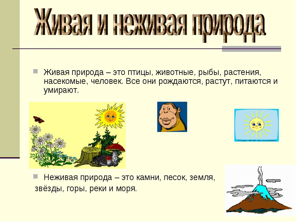 Живая природа – это птицы, животные, рыбы, растения, насекомые, человек. Все ...