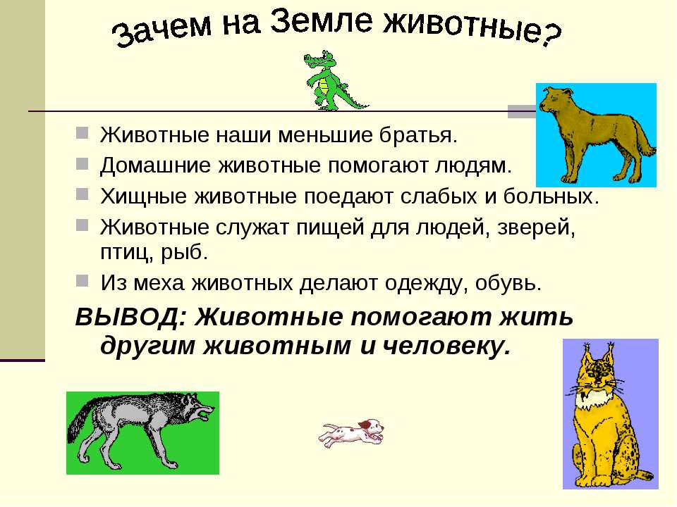 Животные наши меньшие братья. Домашние животные помогают людям. Хищные животн...