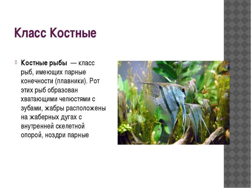 Класс Костные Костные рыбы — класс рыб, имеющих парные конечности (плавники)...