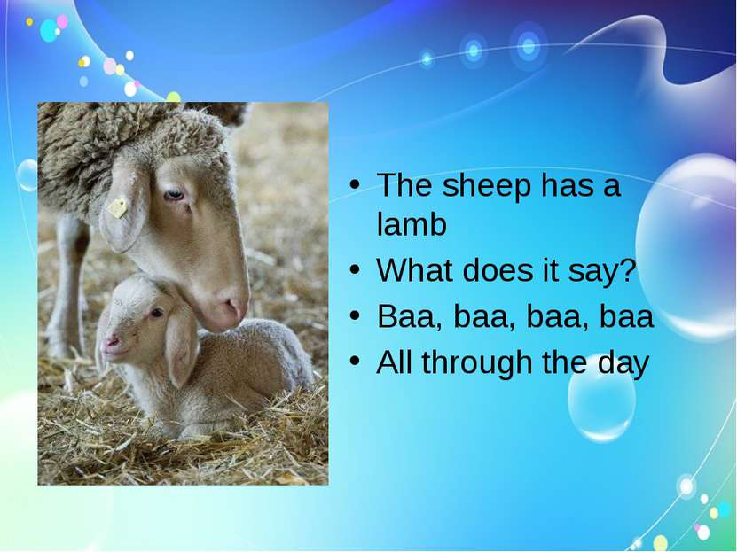 The sheep has a lamb What does it say? Baa, baa, baa, baa All through the day