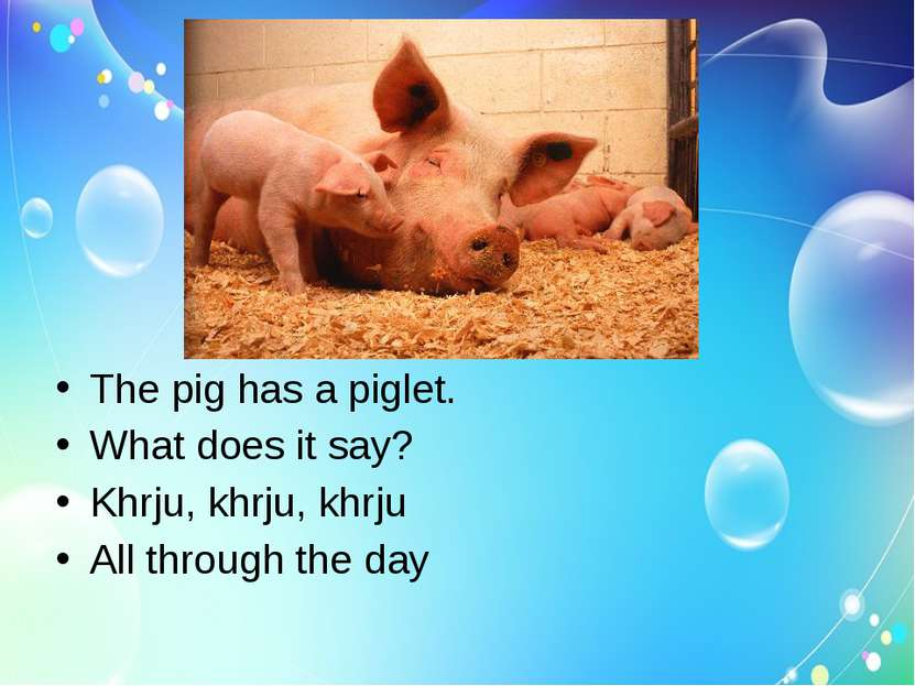 The pig has a piglet. What does it say? Khrju, khrju, khrju All through the day