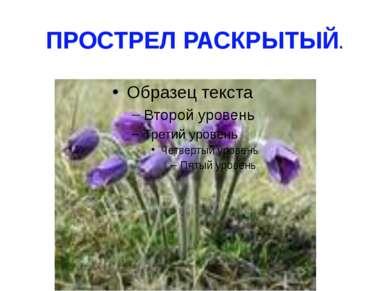 ПРОСТРЕЛ РАСКРЫТЫЙ.