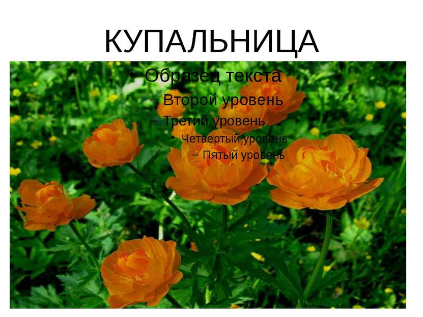КУПАЛЬНИЦА