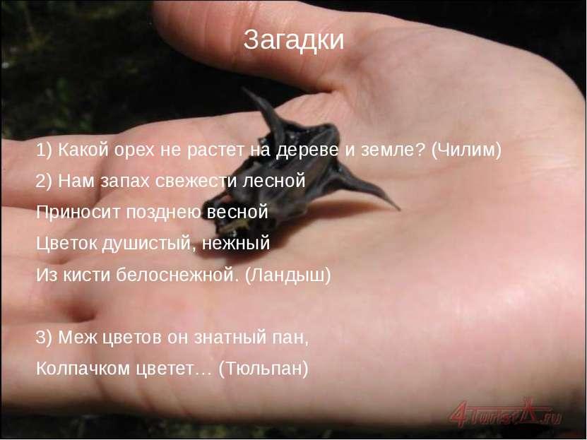 Загадки  1) Какой орех не растет на дереве и земле? (Чилим) 2) Нам запах св...