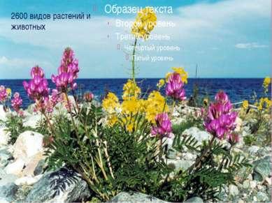 2600 видов растений и животных
