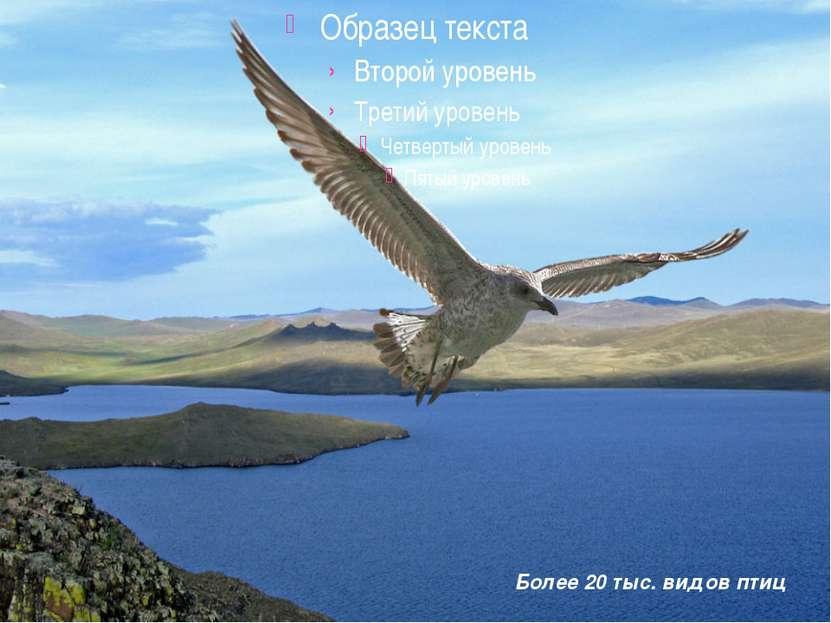 Более 20 тыс. видов птиц