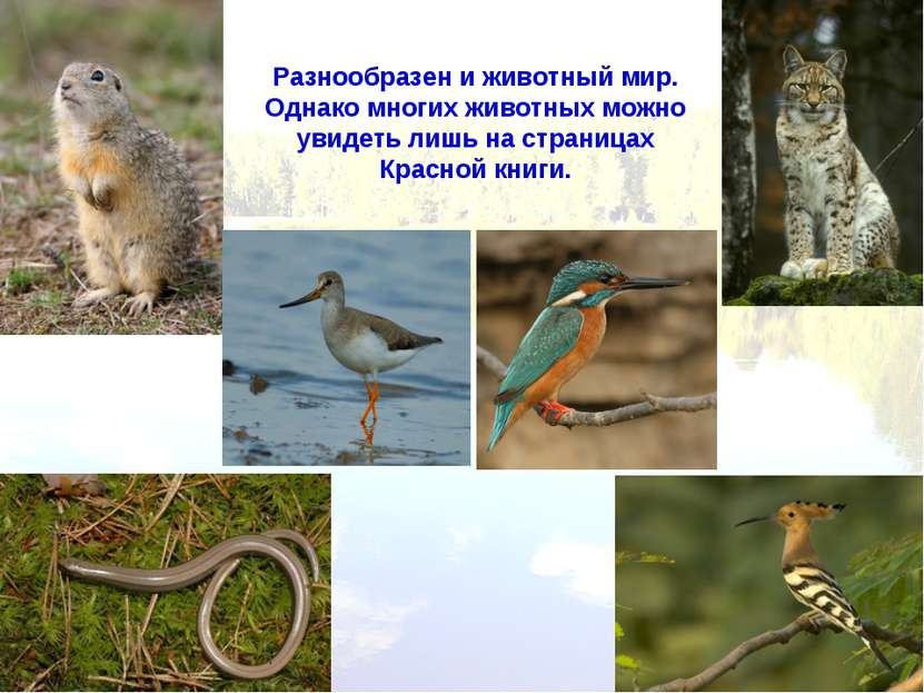 Разнообразен и животный мир. Однако многих животных можно увидеть лишь на стр...