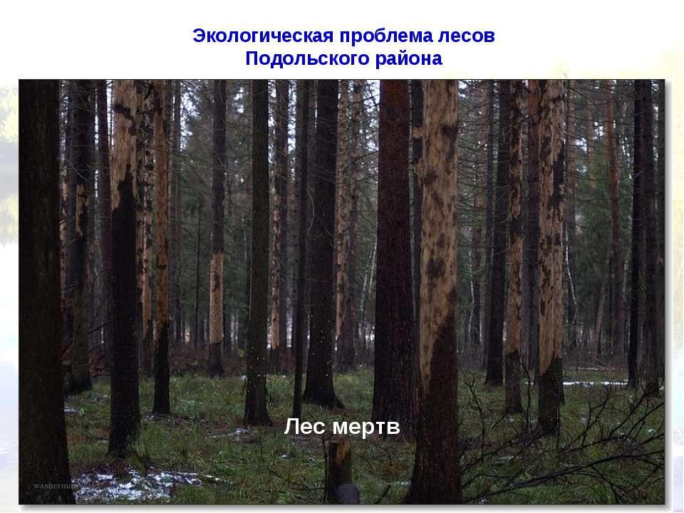 Экологическая проблема лесов Подольского района Лес мертв