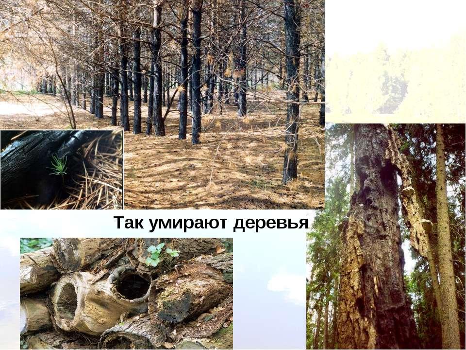 Так умирают деревья