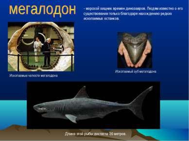 Длина этой рыбы достигла 20 метров. - морской хищник времен динозавров. Людям...