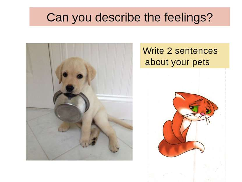 Can you describe the feelings? Write 2 sentences about your pets