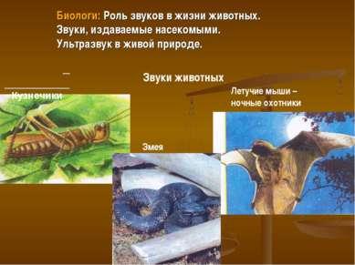 Кузнечики Летучие мыши – ночные охотники Звуки животных Змея Биологи: Роль зв...