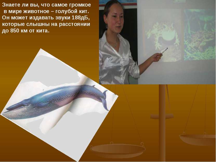 Знаете ли вы, что самое громкое в мире животное – голубой кит. Он может издав...
