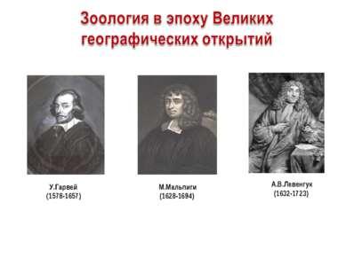 А.В.Левенгук(1632-1723) М.Мальпиги (1628-1694) У.Гарвей (1578-1657)